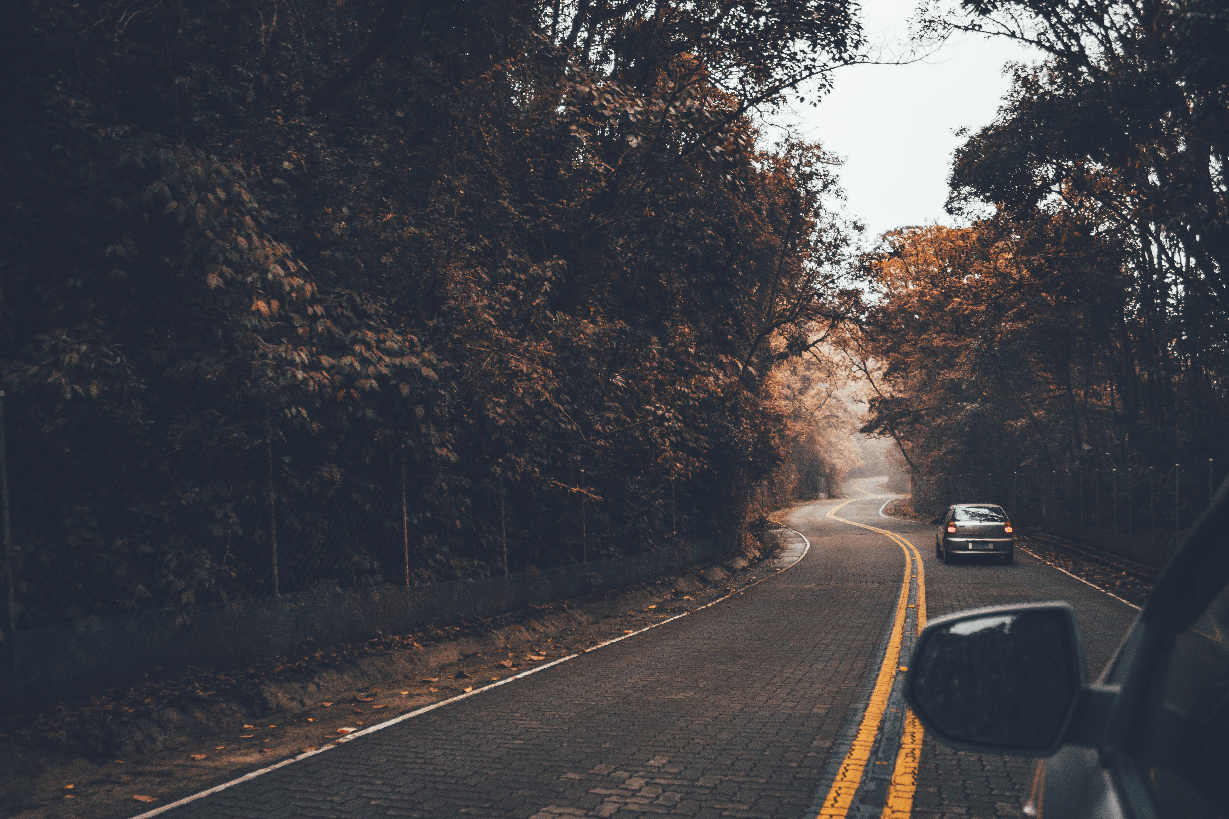 car moving thru trees