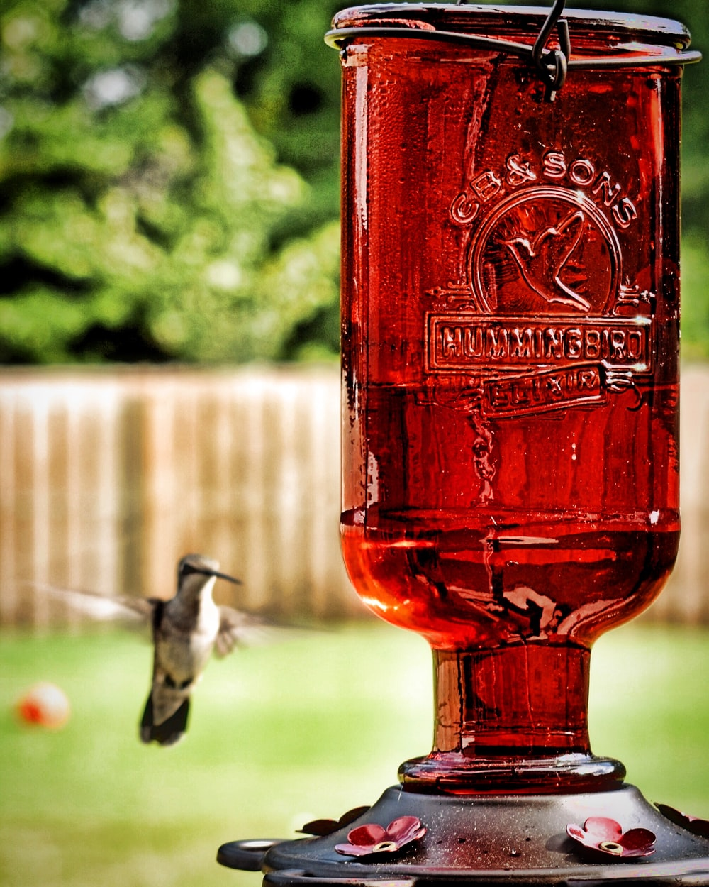 photograph of red bottle near flying humming bird
