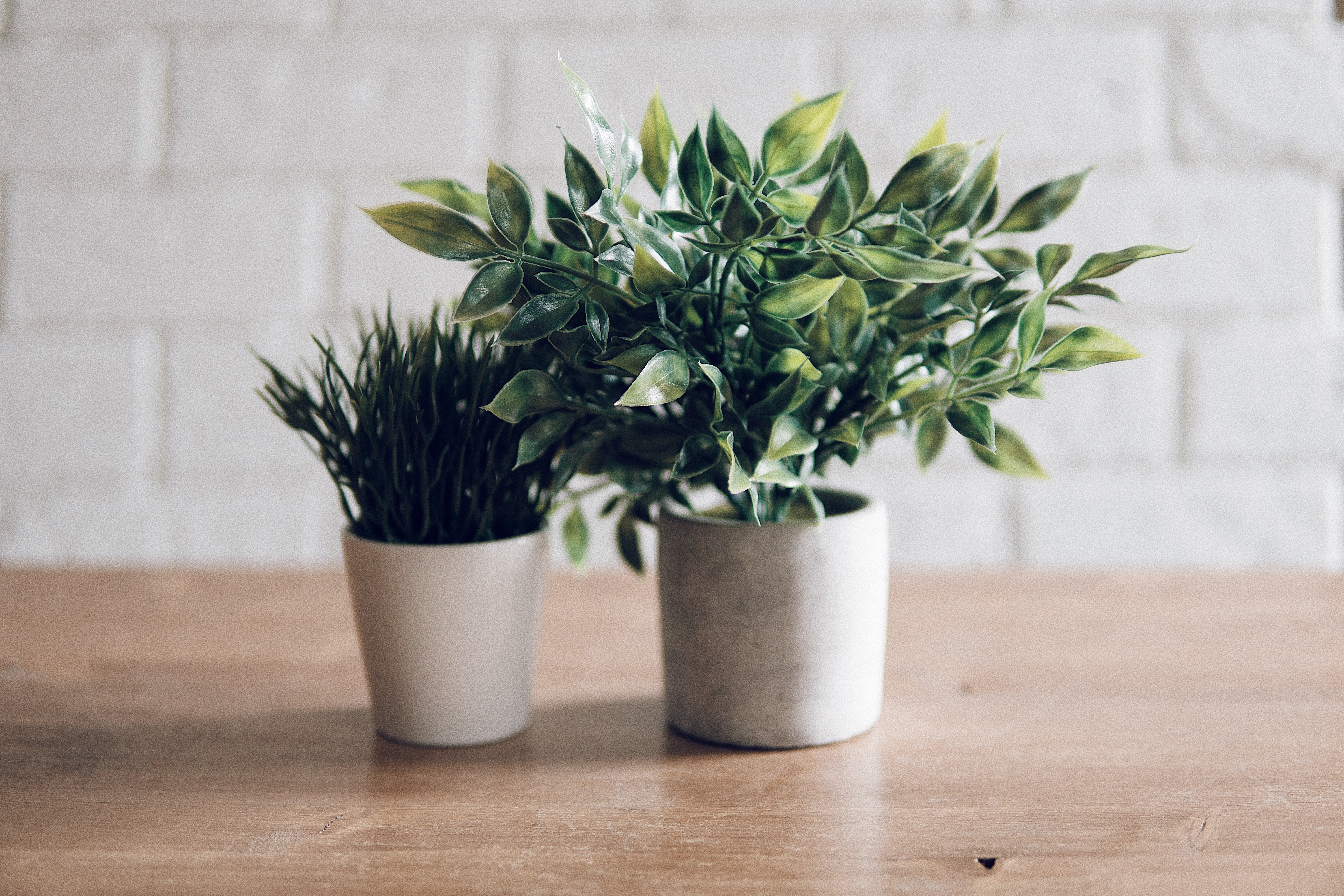 two plants in white pots