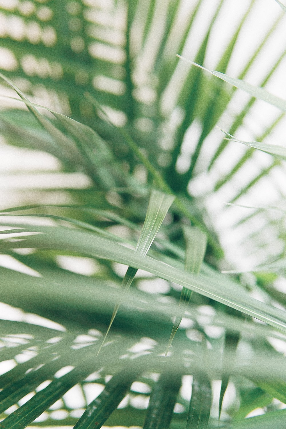 closeup photography of green palm leaves