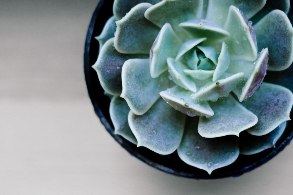 macro-shot photography of green succulent