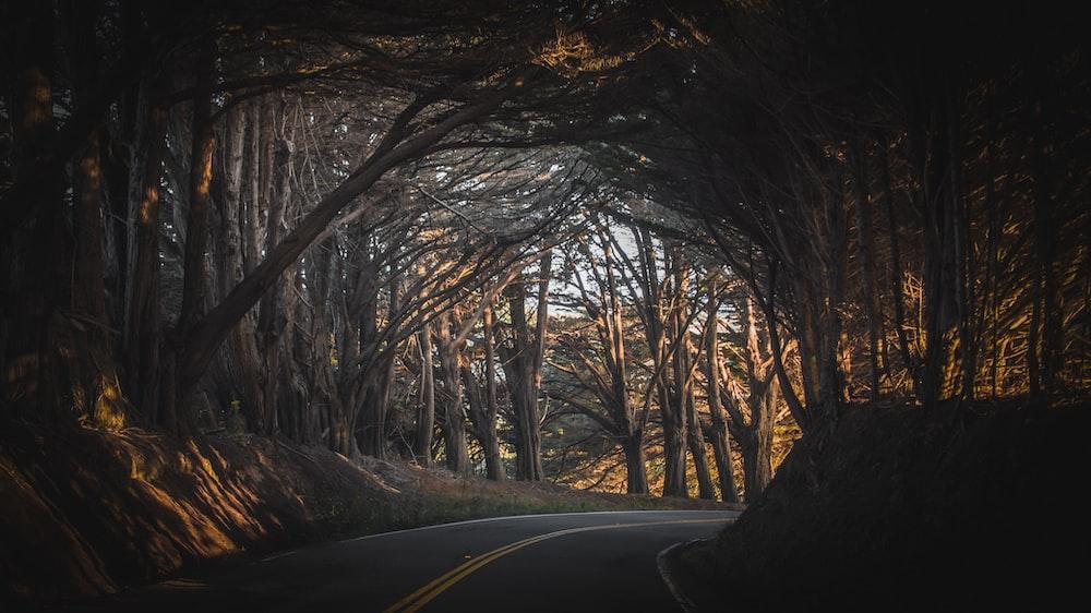 gray asphalt road in between trees during daytime