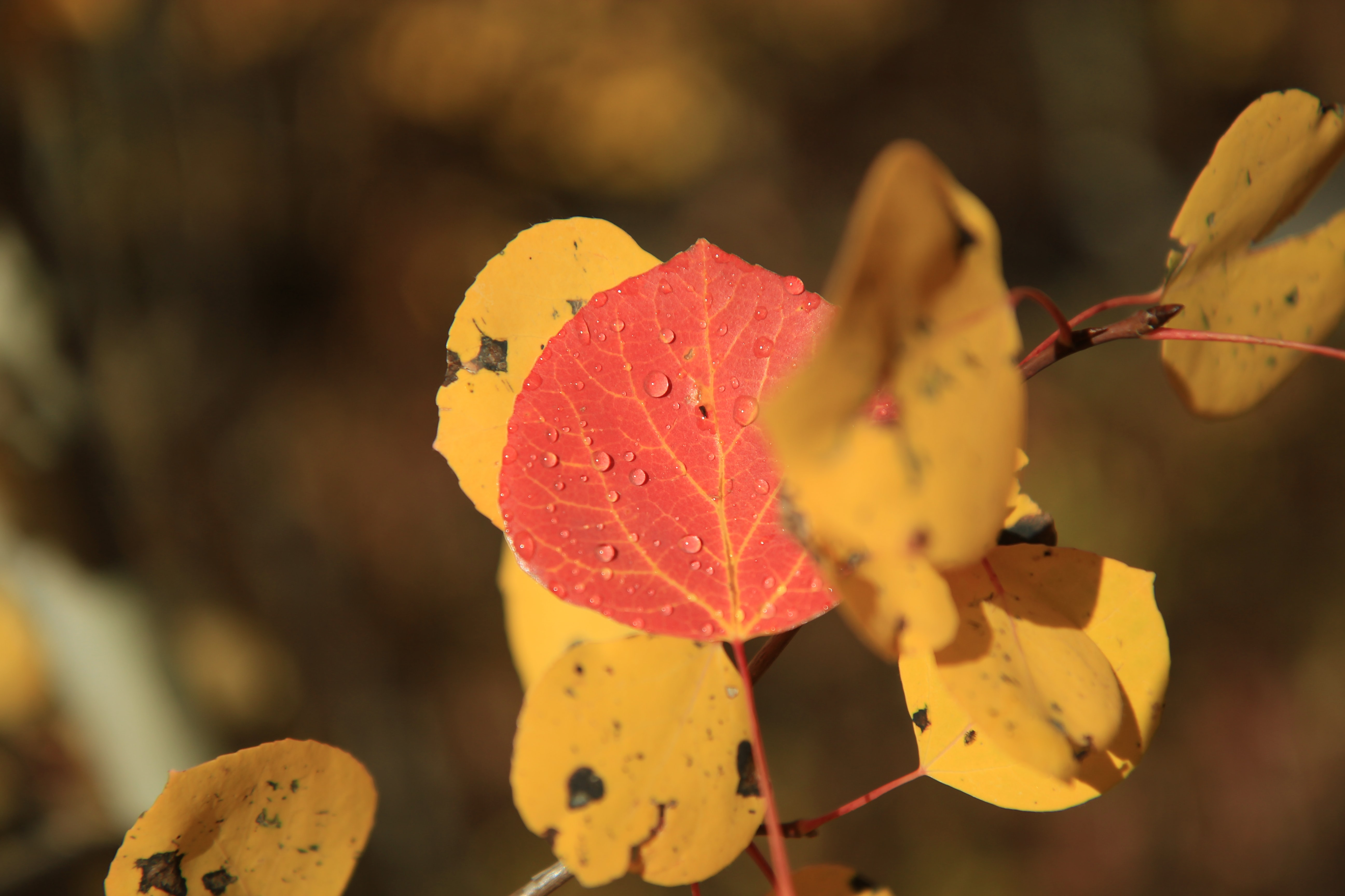 selective focus photograph of red leaf