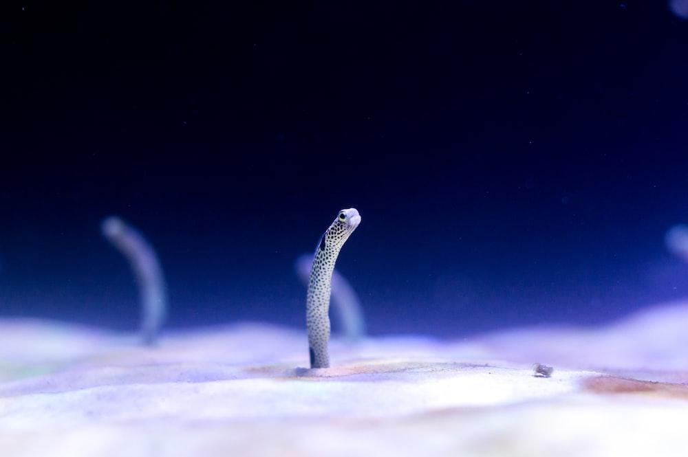 micro photography of white marine creature