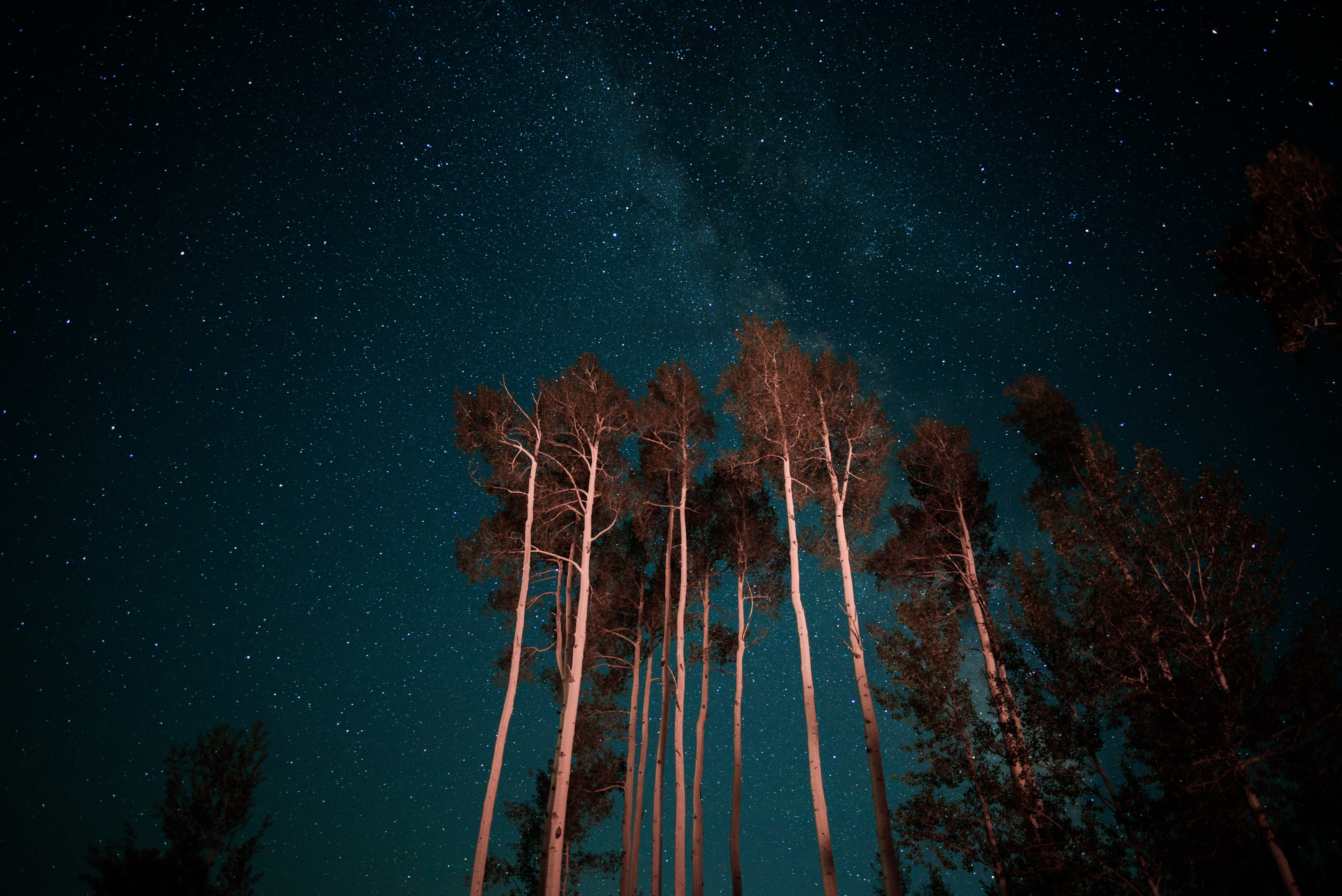 worm's-eye view of night sky above trees