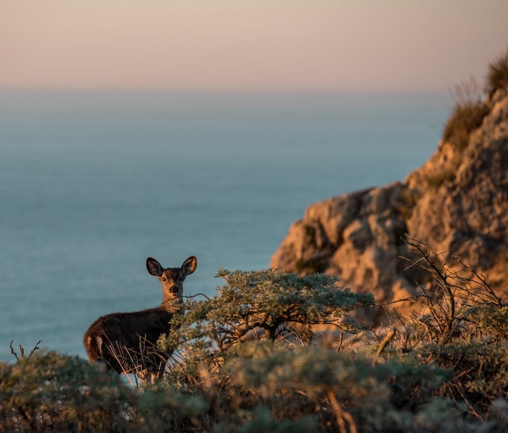 brown deer on brown rock formation during daytime