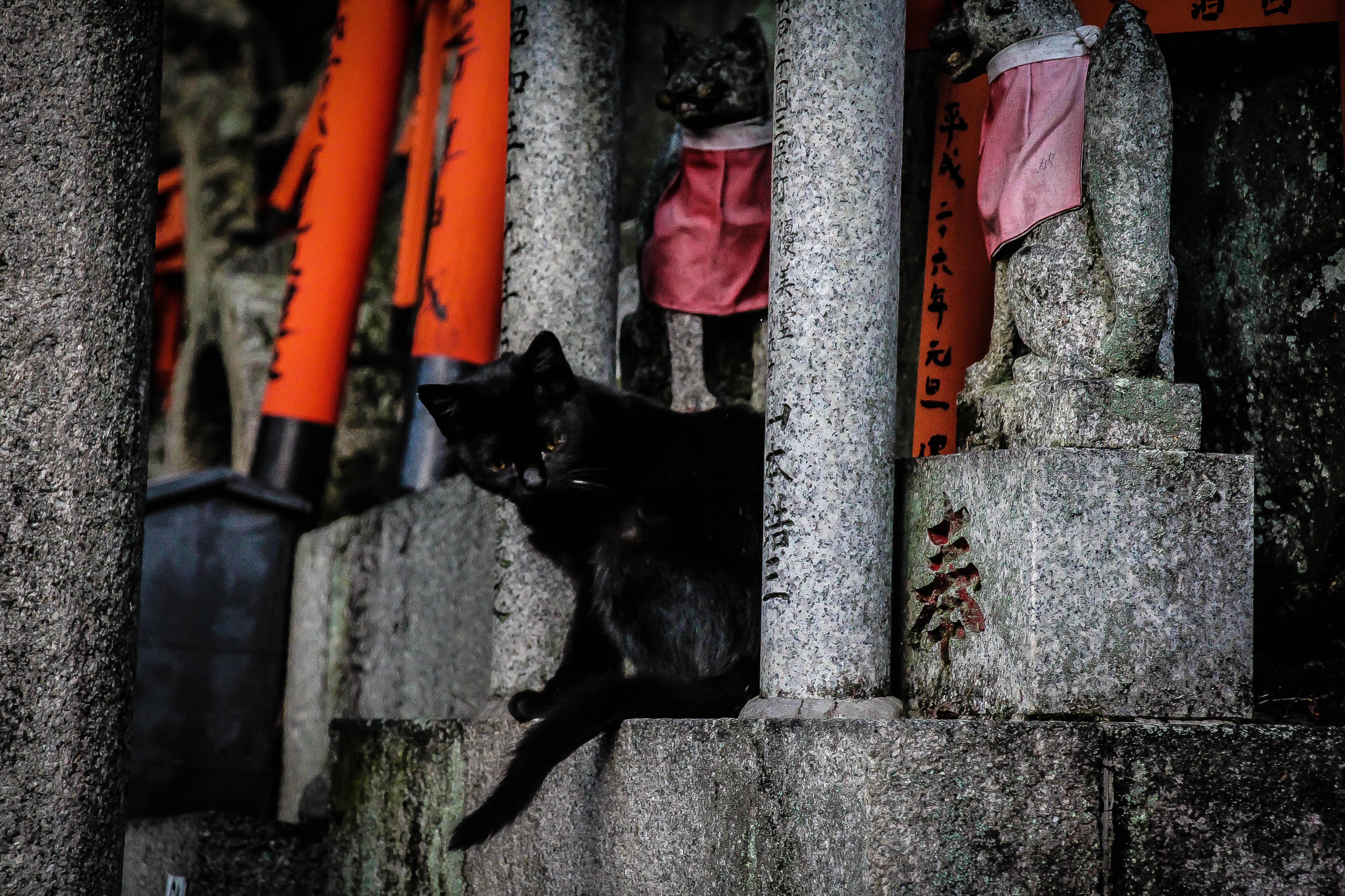 black cat between two pillars