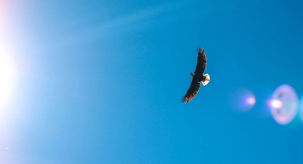 worms eye view photography of eagle flying across the sky
