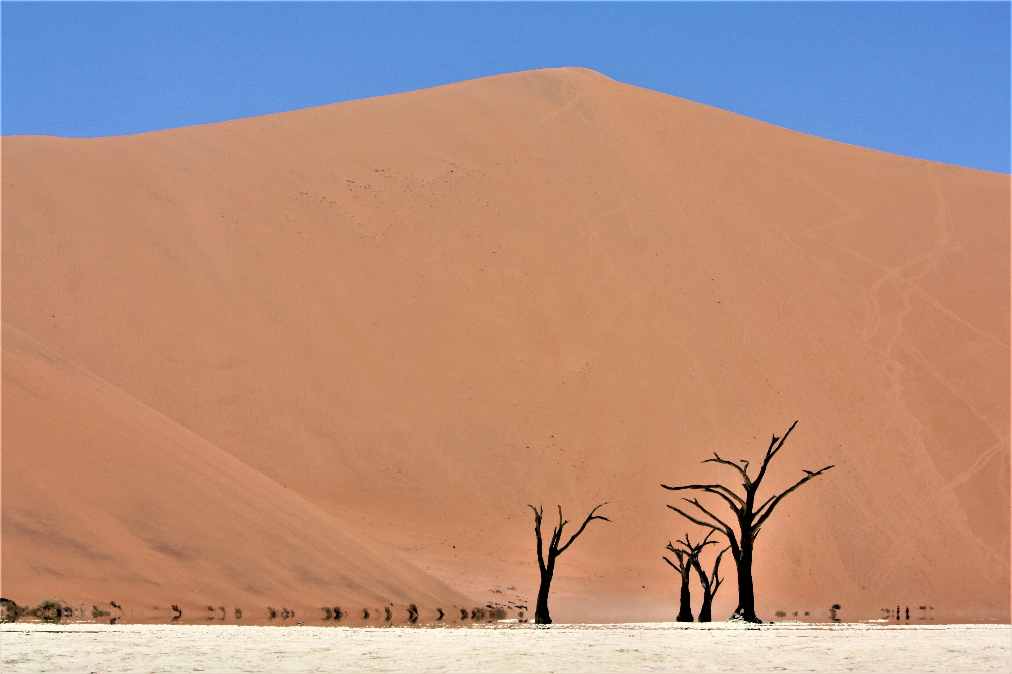 leafless tree in desert