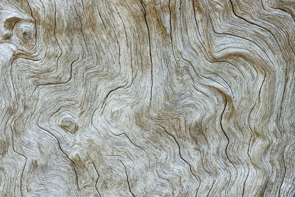 tree trunk surface