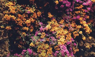 3924. Virágok