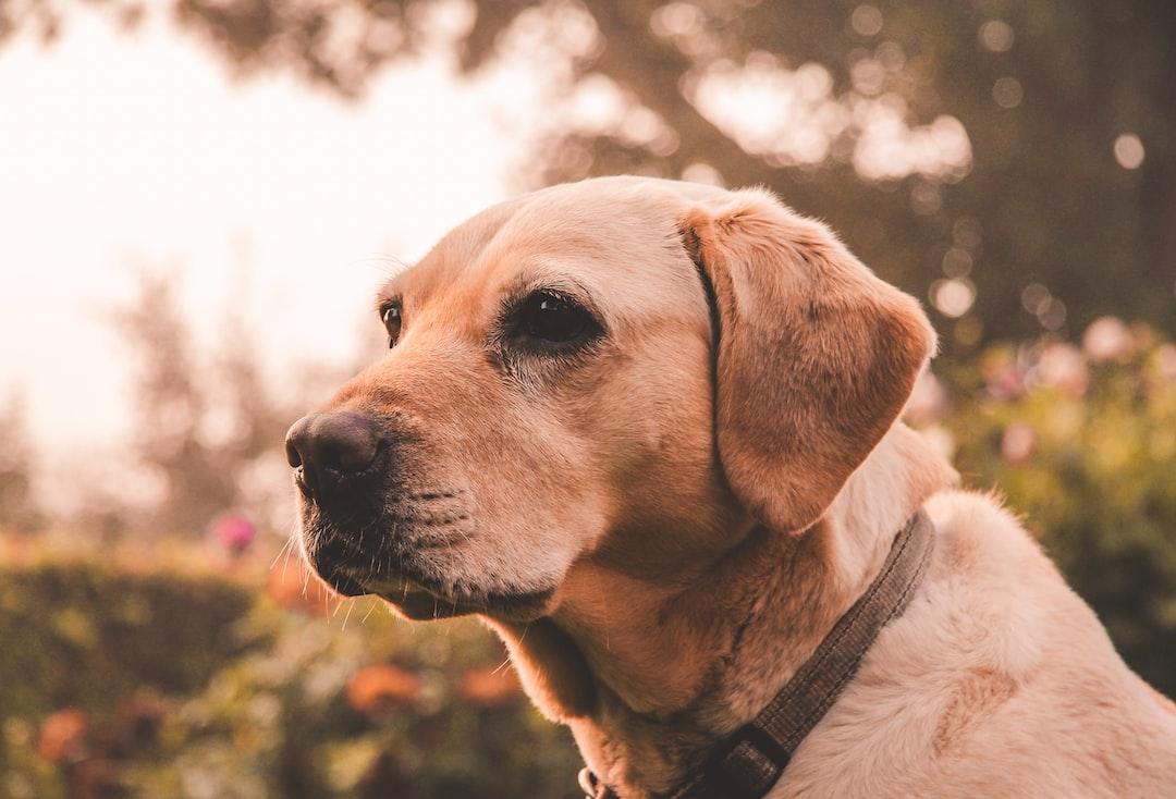 Kutya