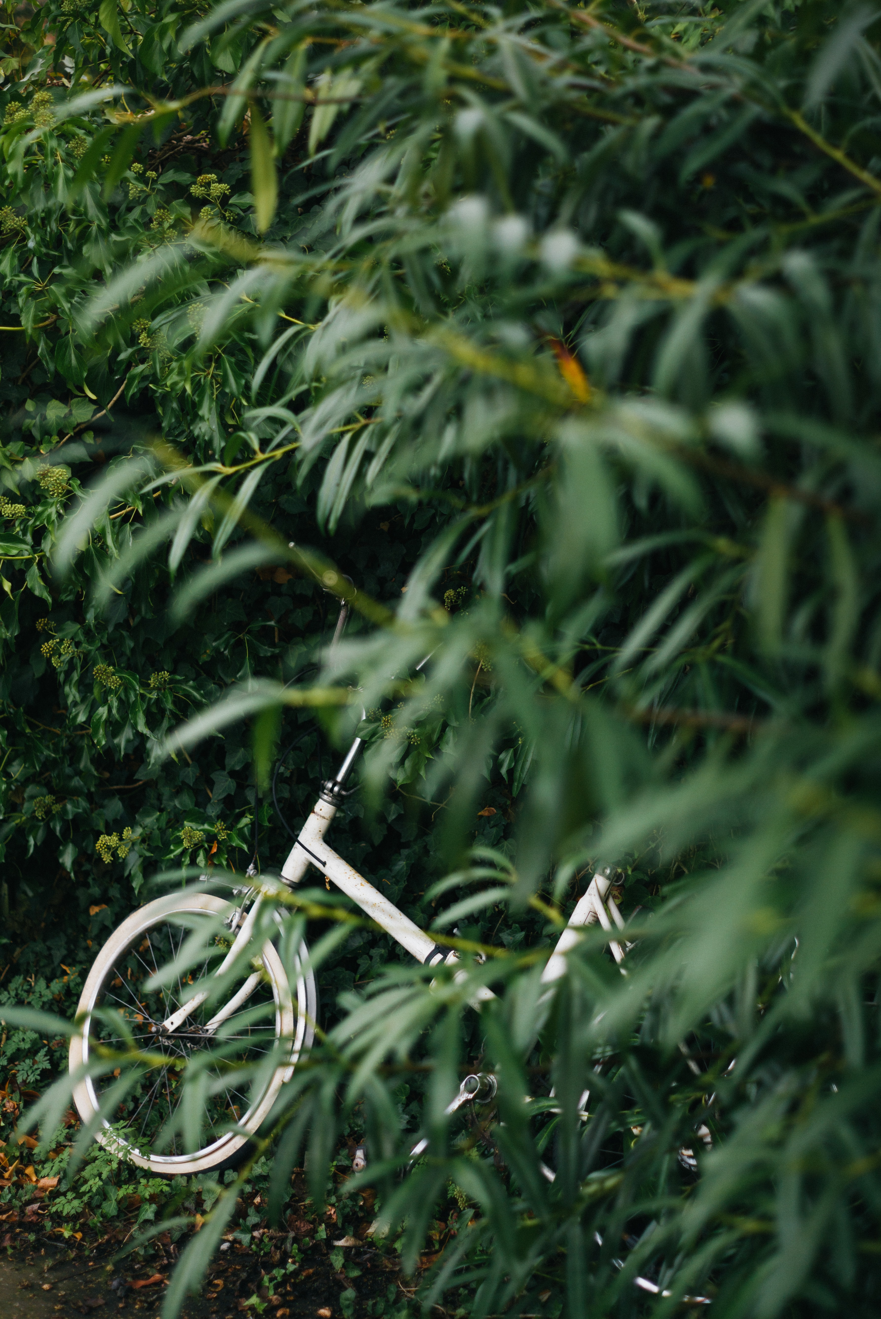 white bicycle beside green leaf plants at daytime
