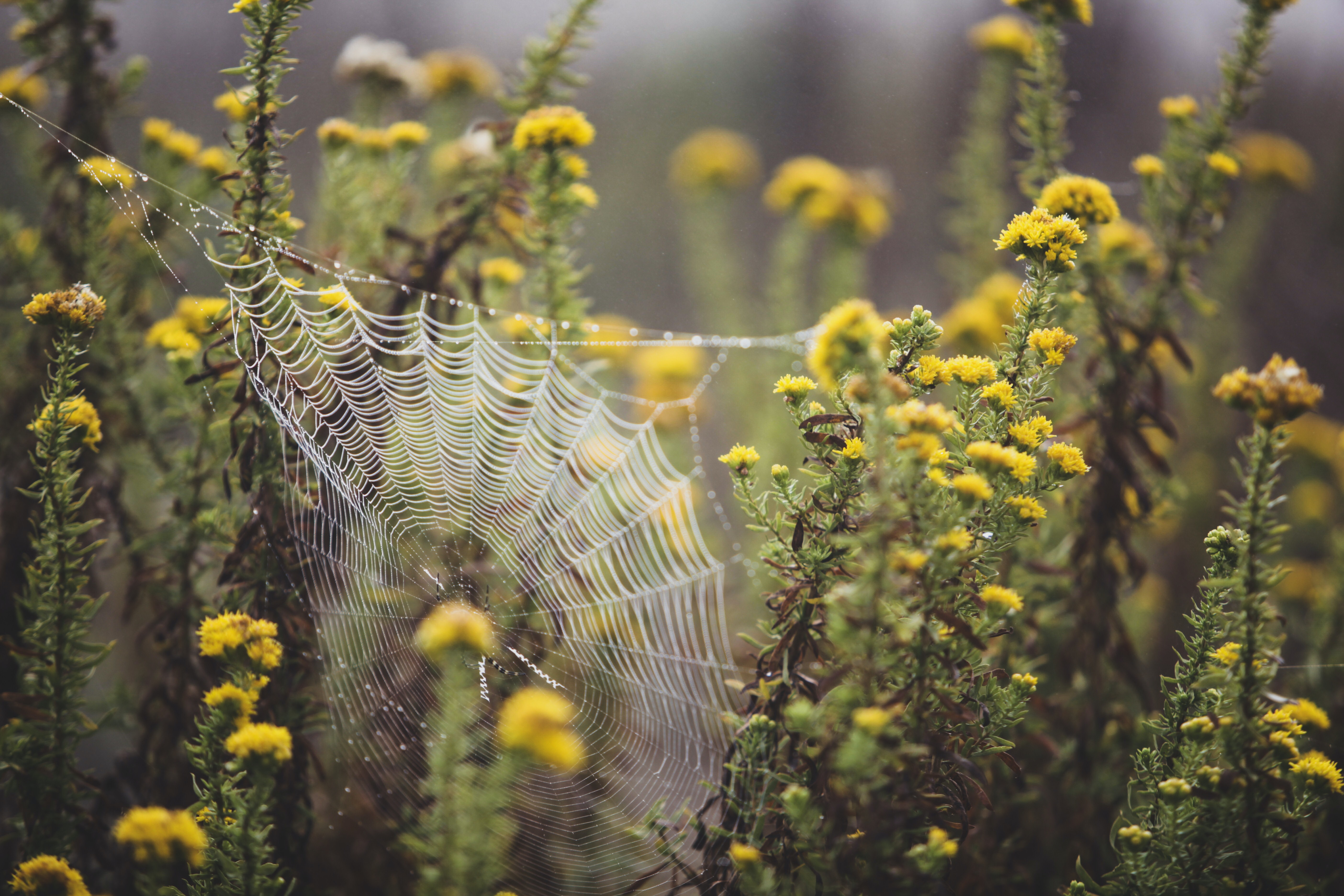 tilt shift photography of yellow flower plants with spider web