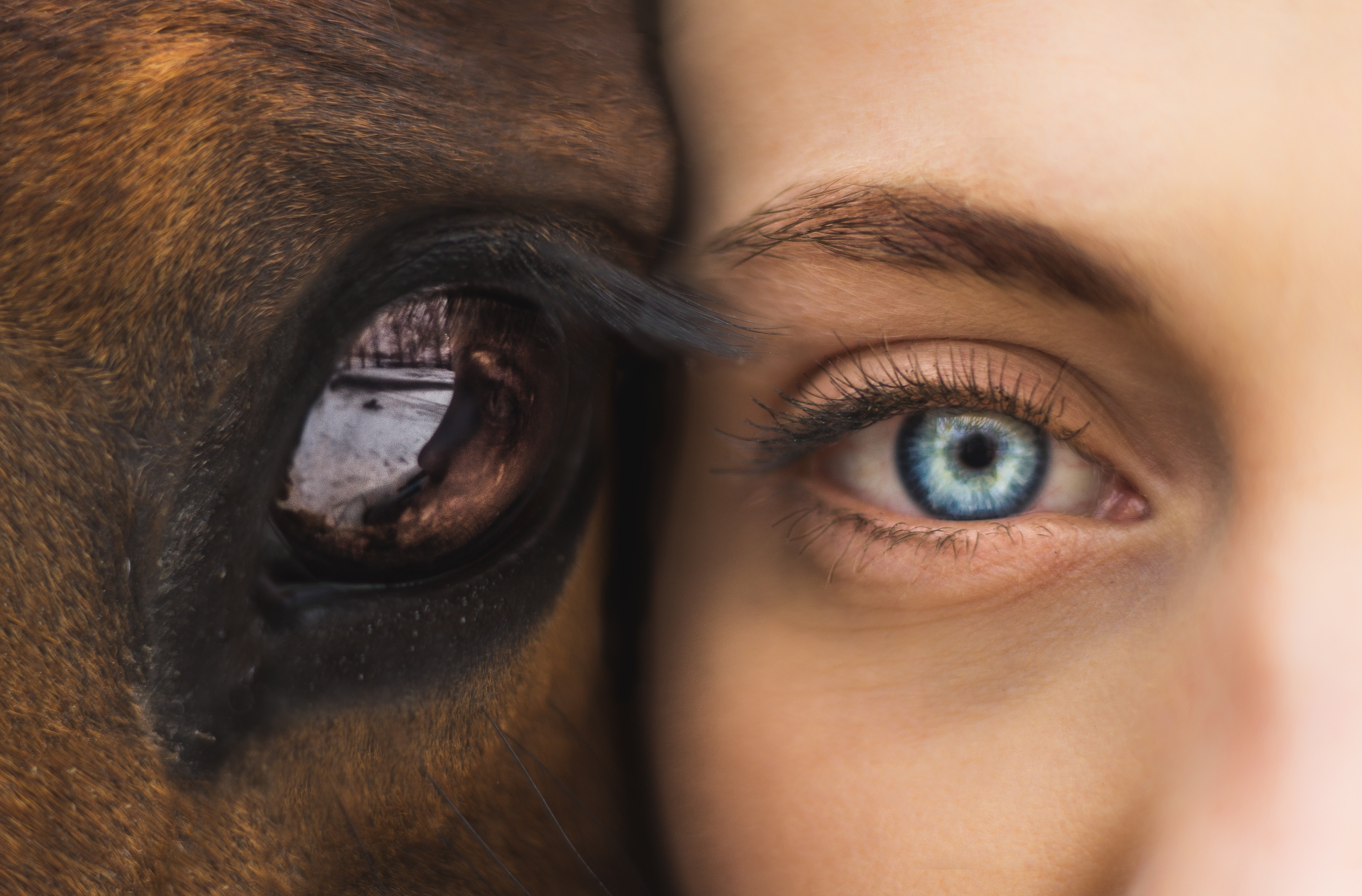 person and animal faces