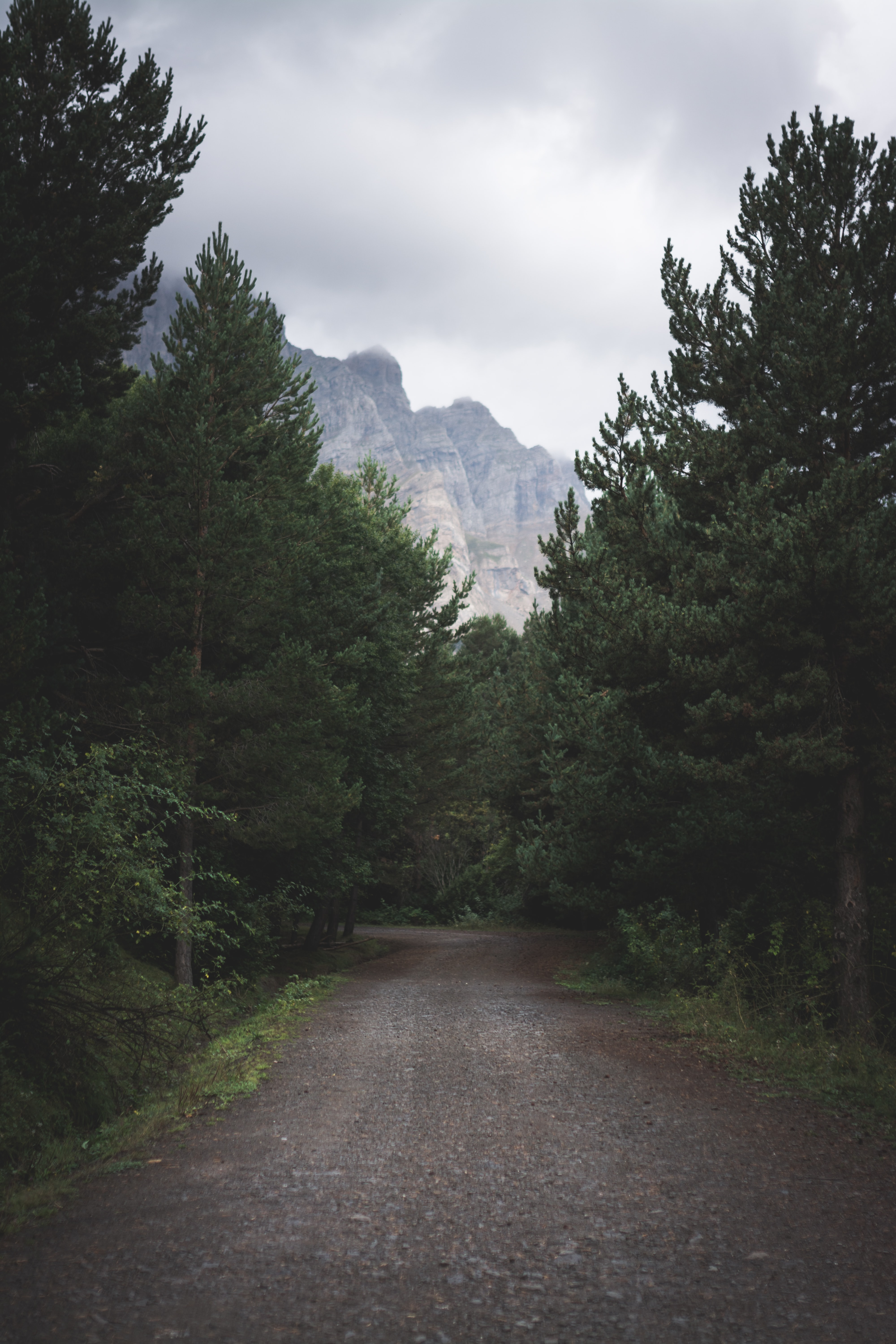 Forest Road Pictures Download Free Images On Unsplash