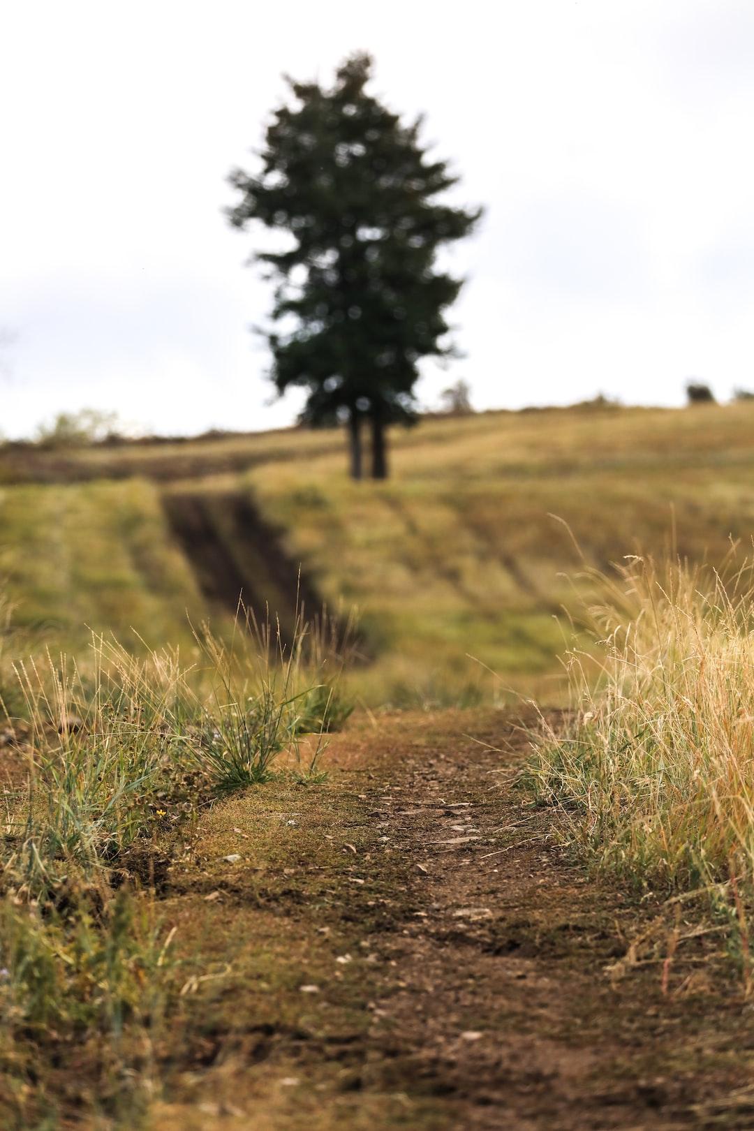 Patrick Hendry - Towards the Tree