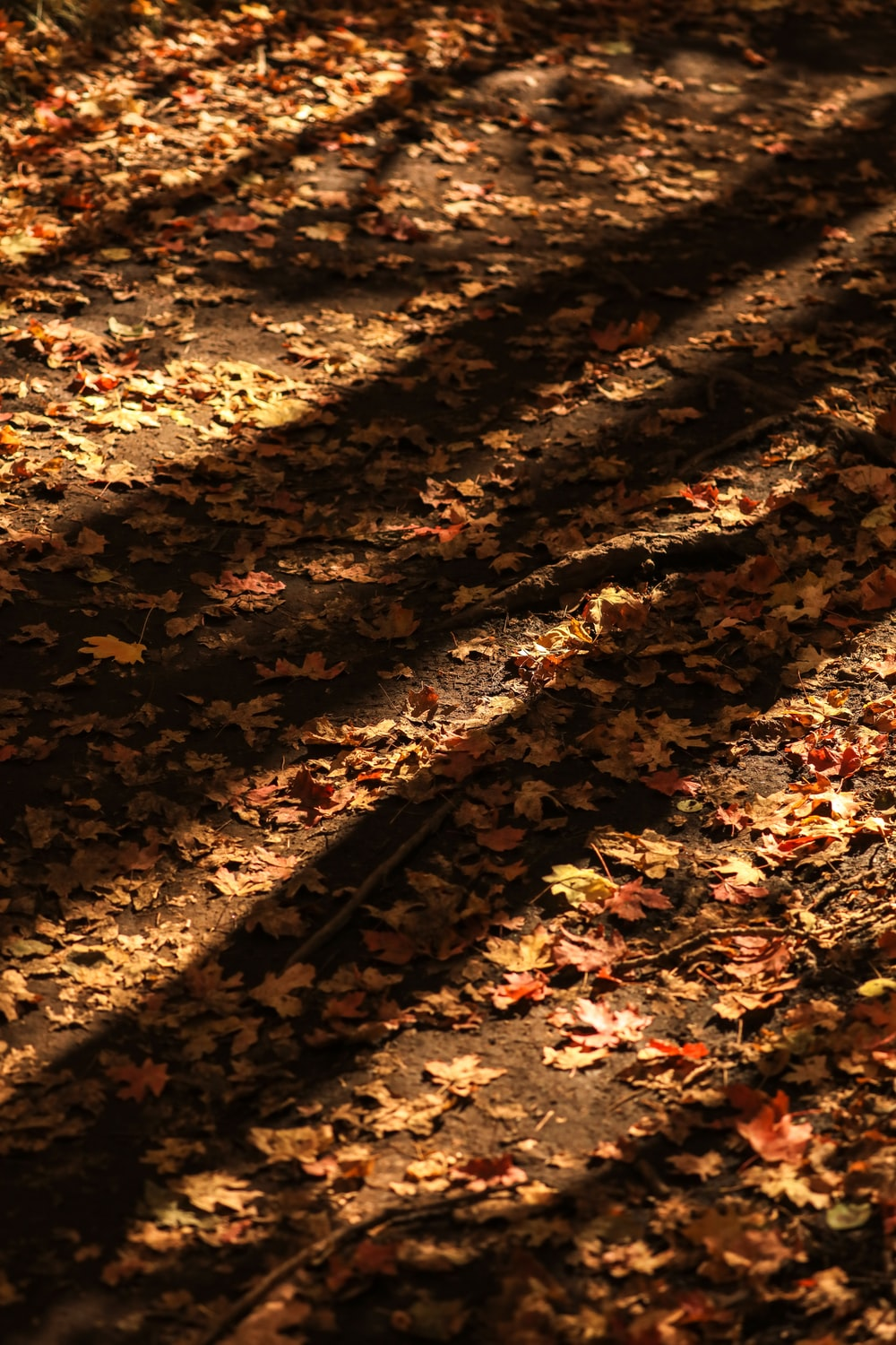 photo of dried leaves on soil