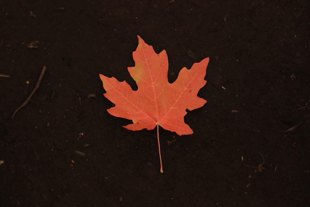 photo of orange maple leaf