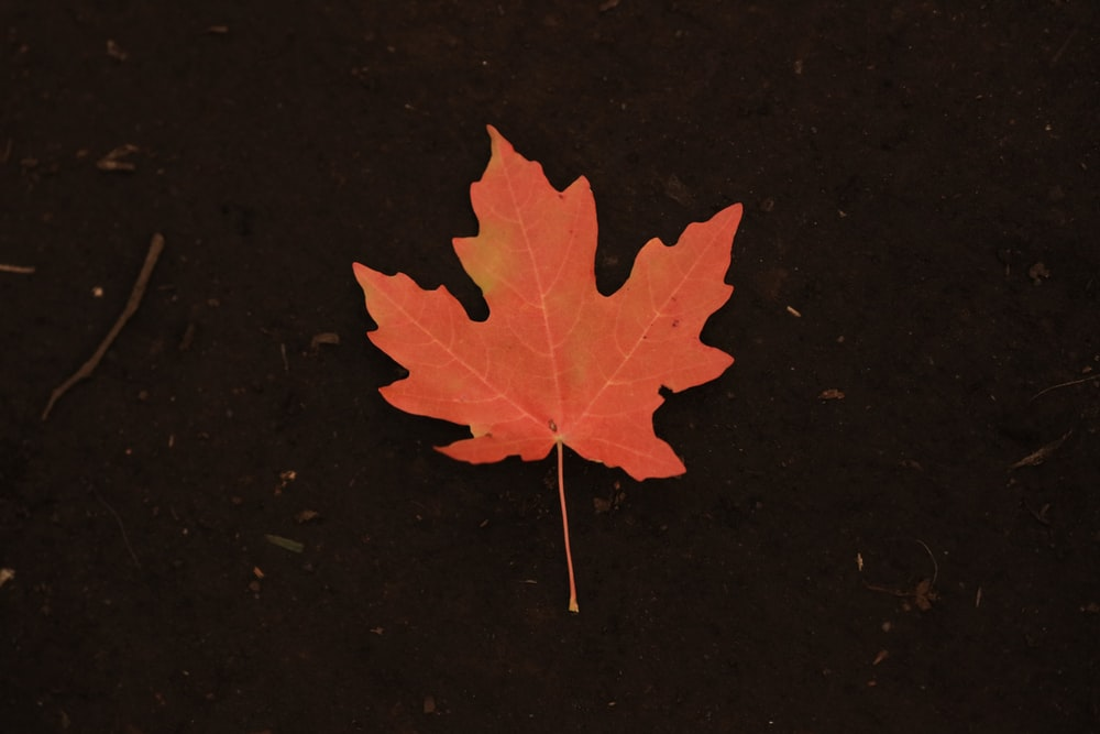 photo of orange maple leaf