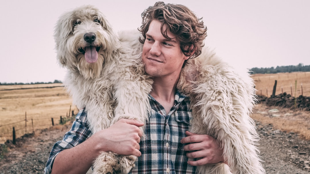 500 Man And Dog Pictures Hd Download Free Images On