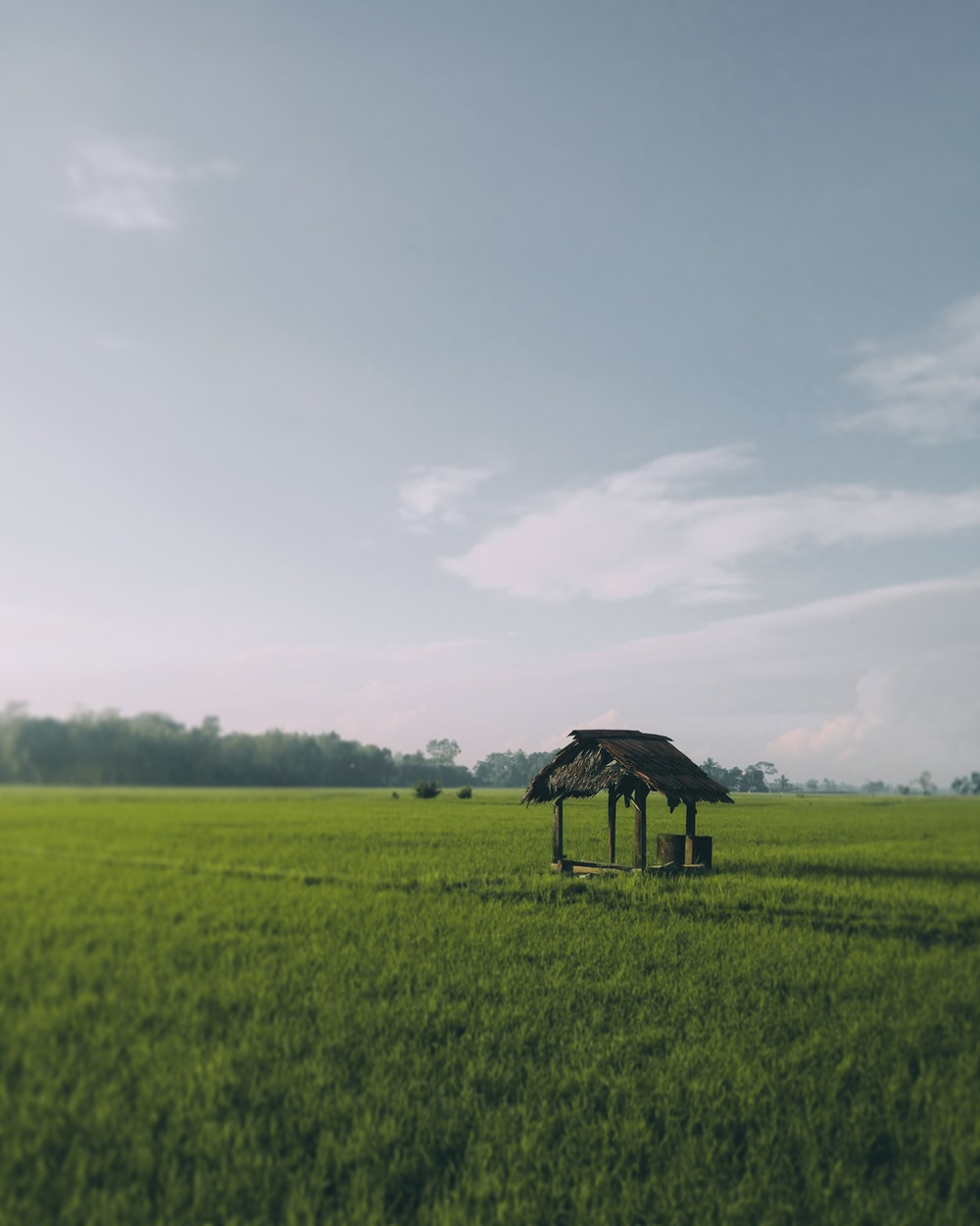 photo of brown hut on middle of rice fields