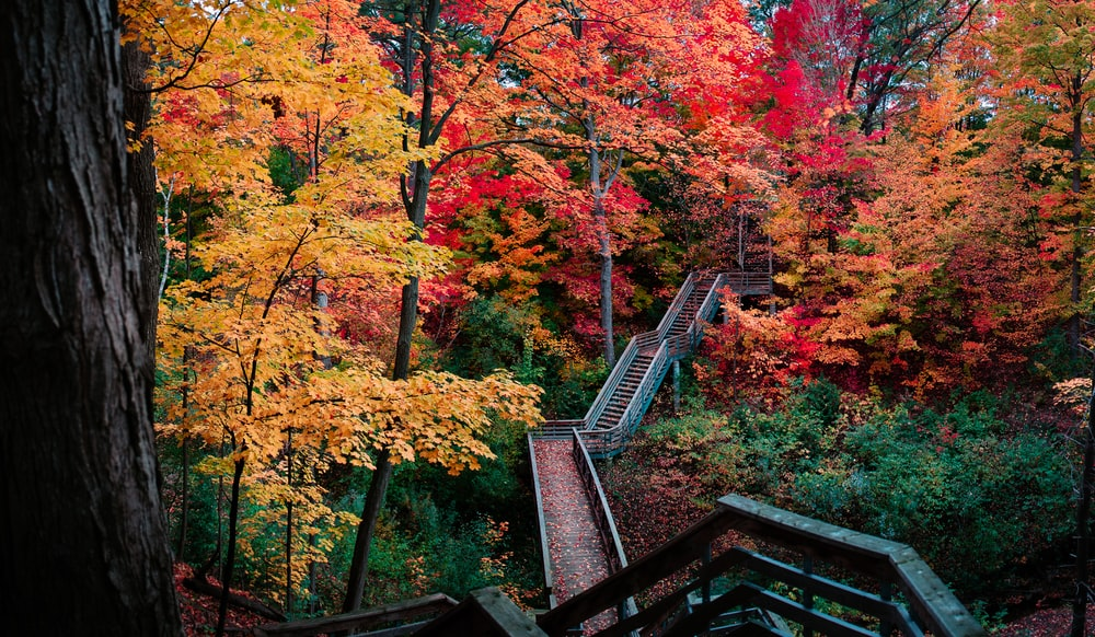 red and orange leafed trees photo
