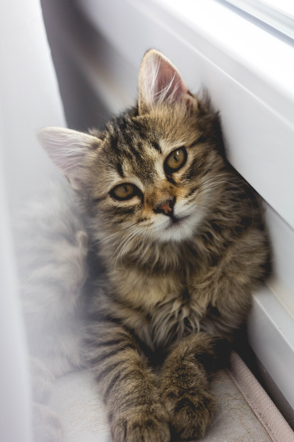 gray tabby kitten leaning on white wall