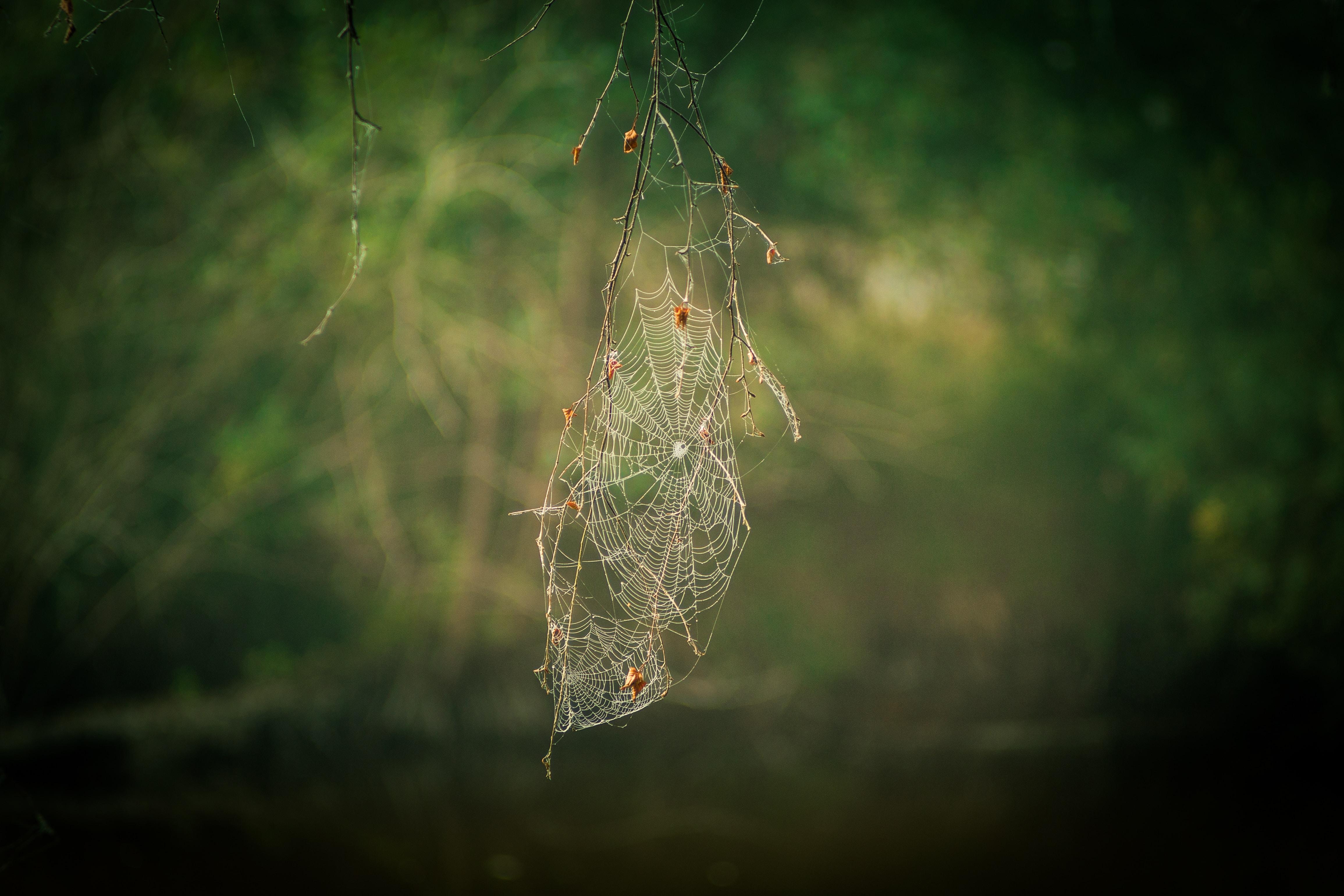white spider web during daytime