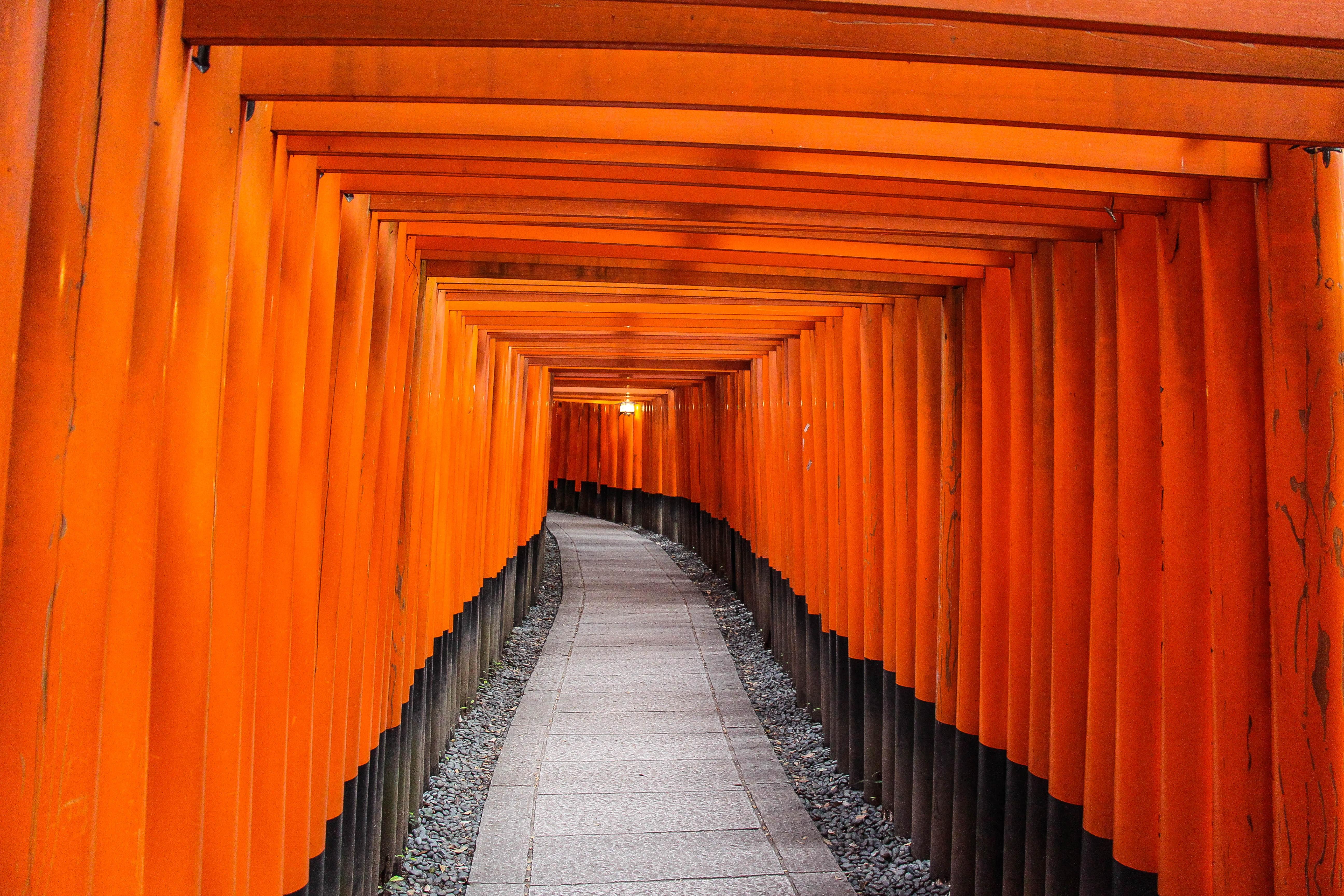 pathway between brown wooden trellis