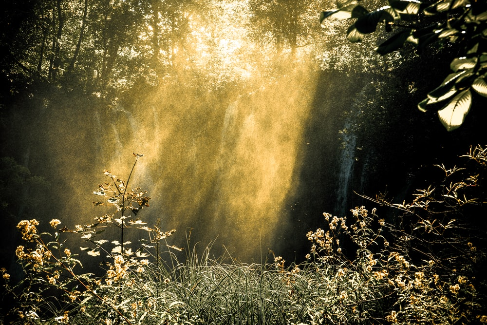 sunlight passing through waterfalls in forest