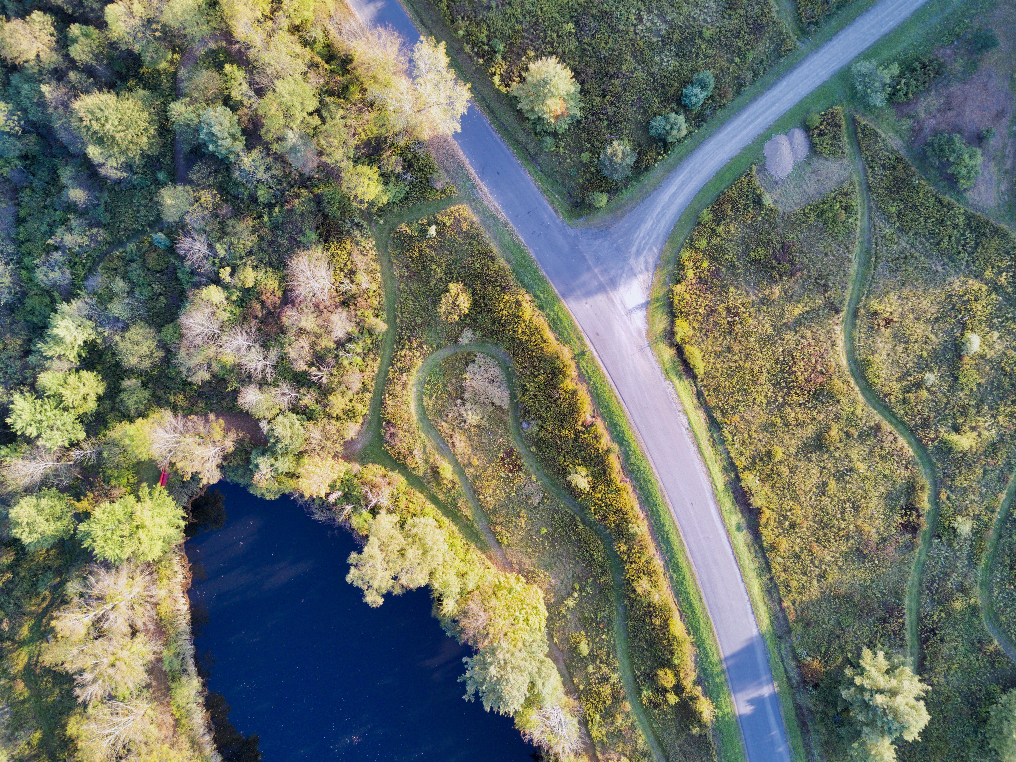 aerial photography of crossroad covered in trees