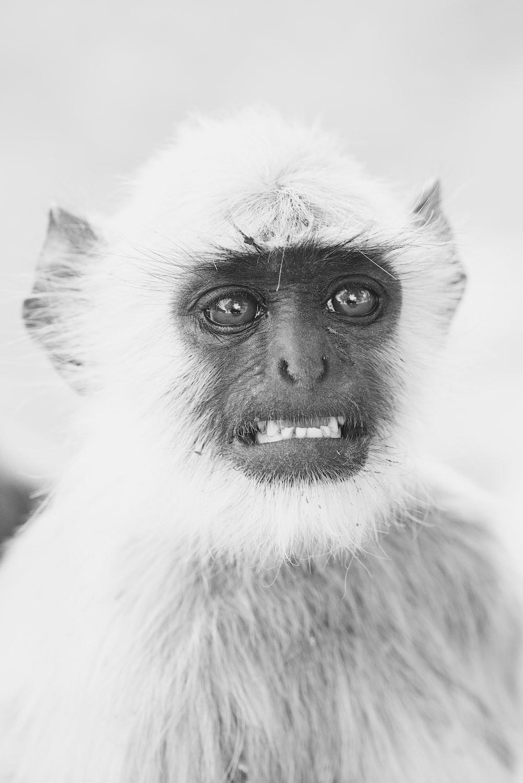 grayscale photo of primate