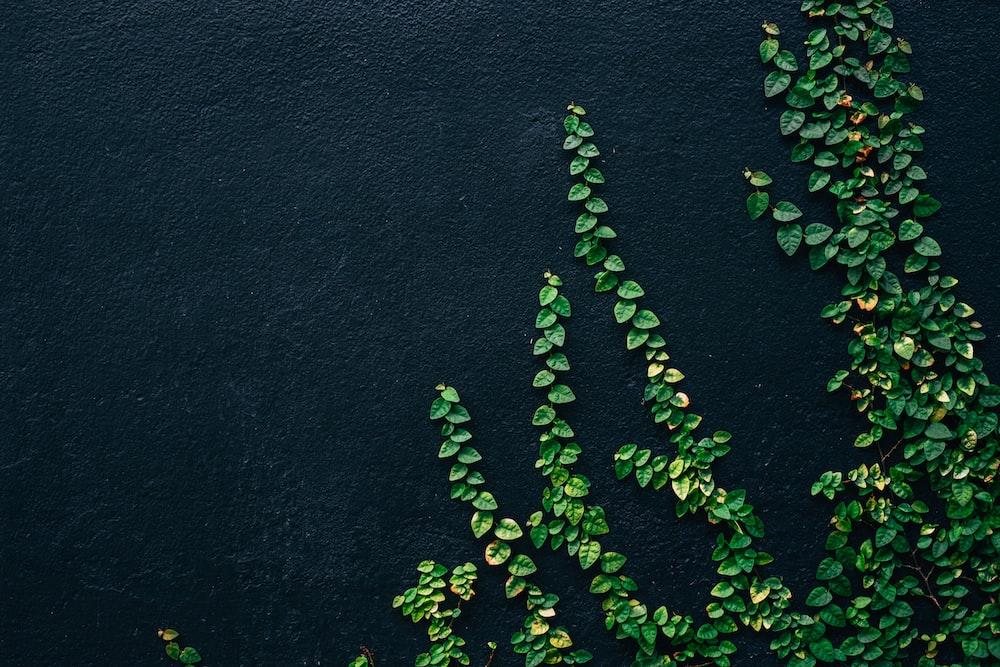 green leaf vines on black painted wall