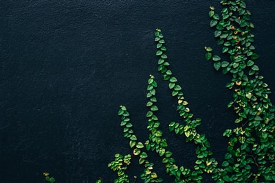 green leaf vines on black painted wall