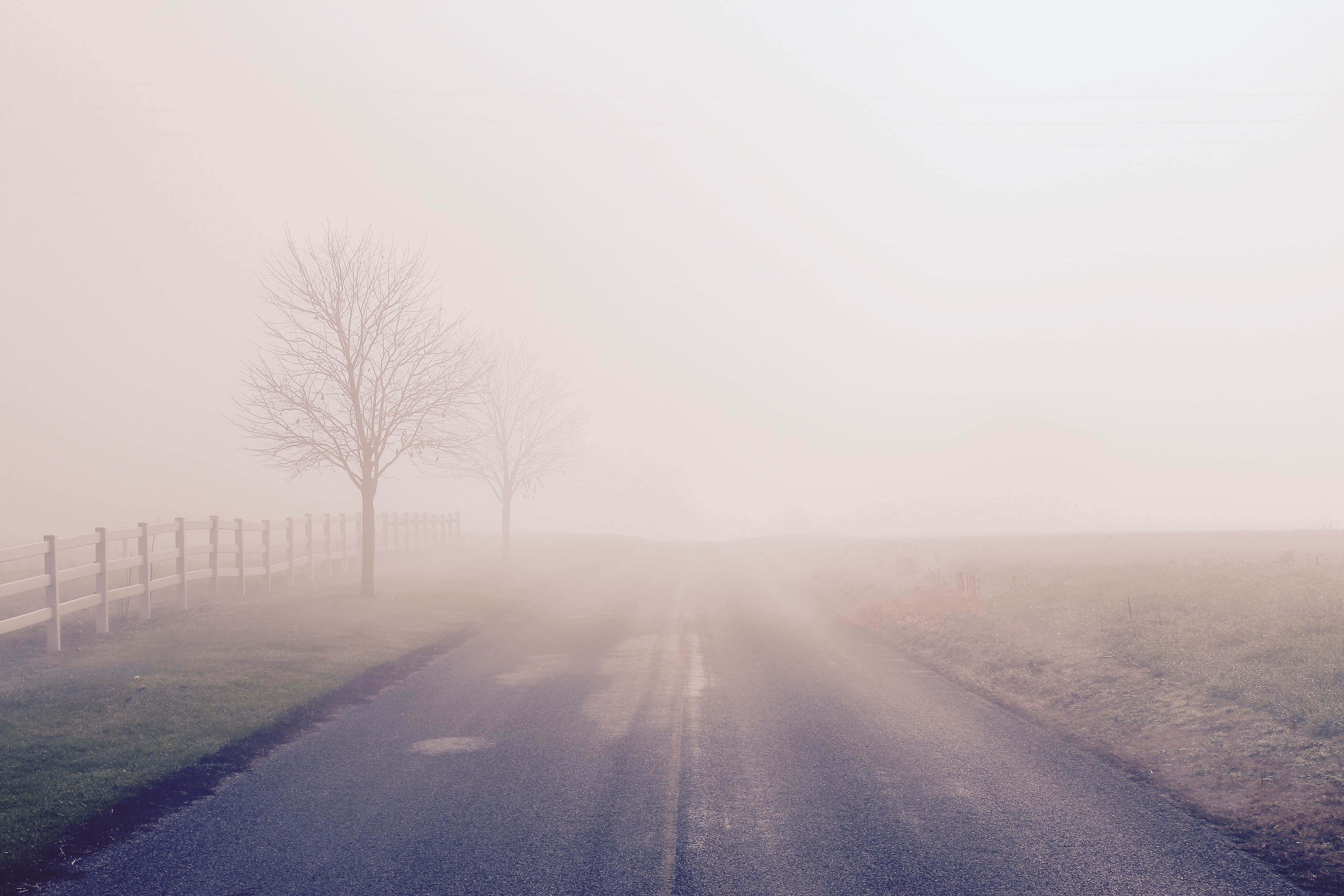 foggy road with bare trees