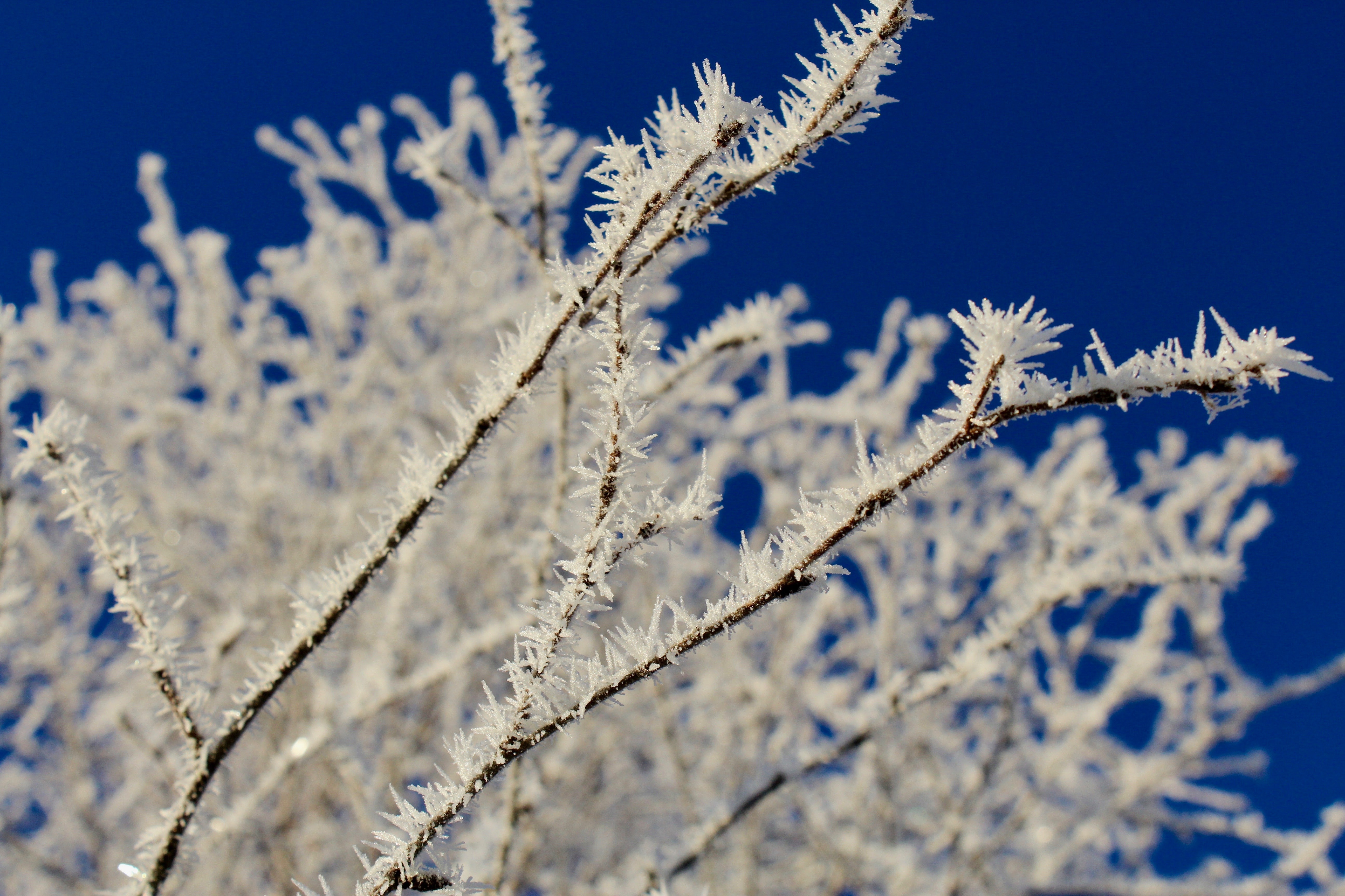 frozen twigs in selective focus photography