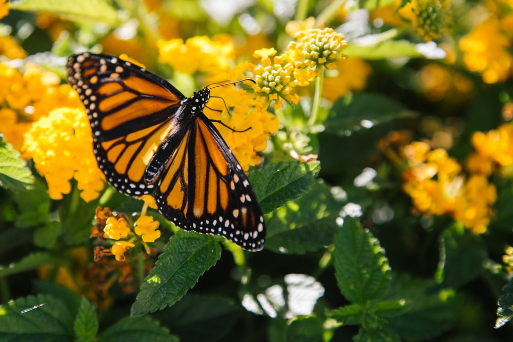 macro photography of butterfly on yellow flower