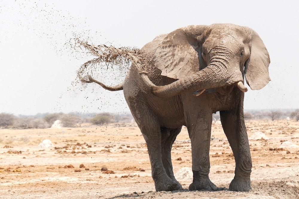 brown elephant on brown field
