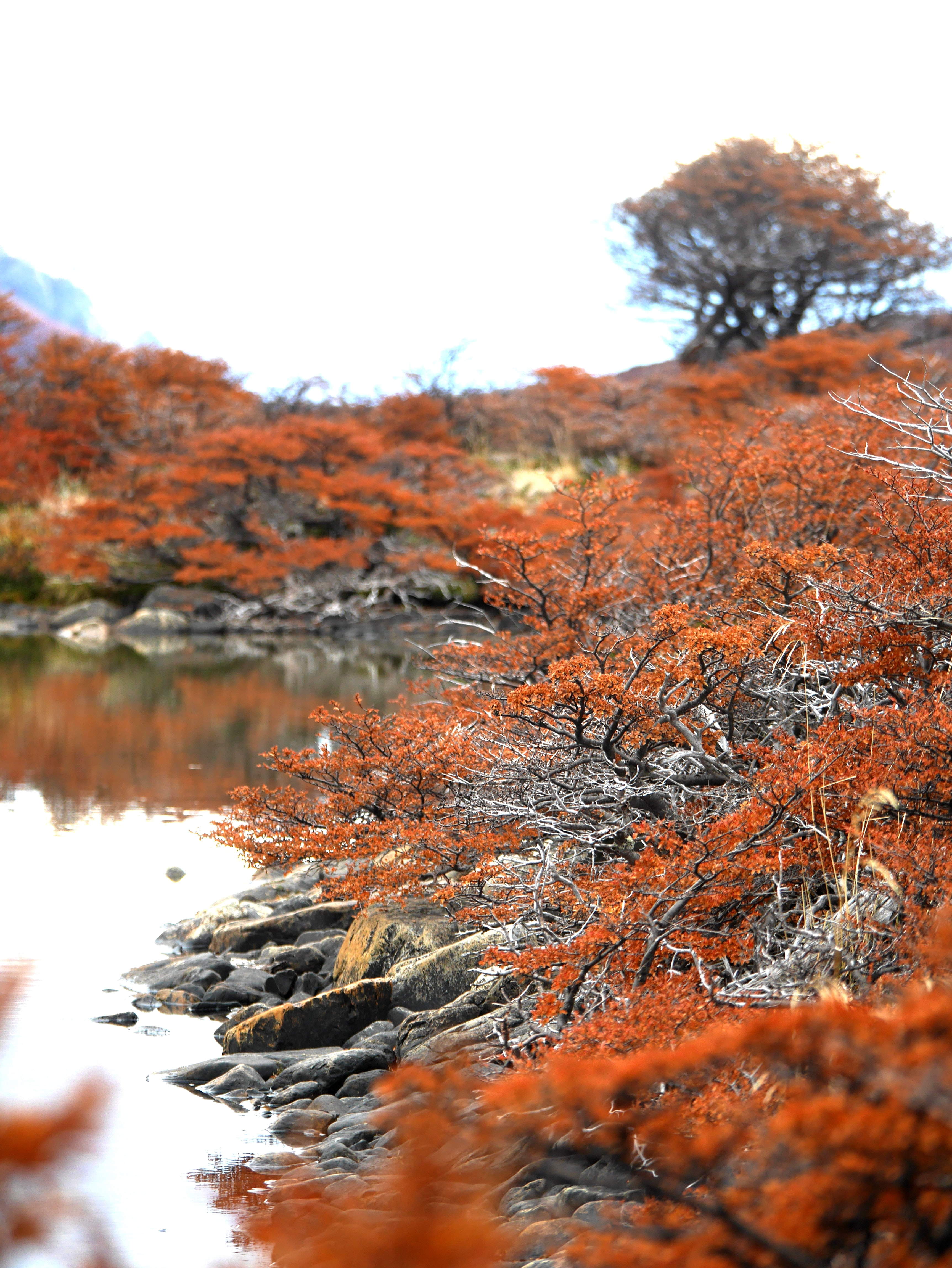 shallow focus photography of orange leafed trees