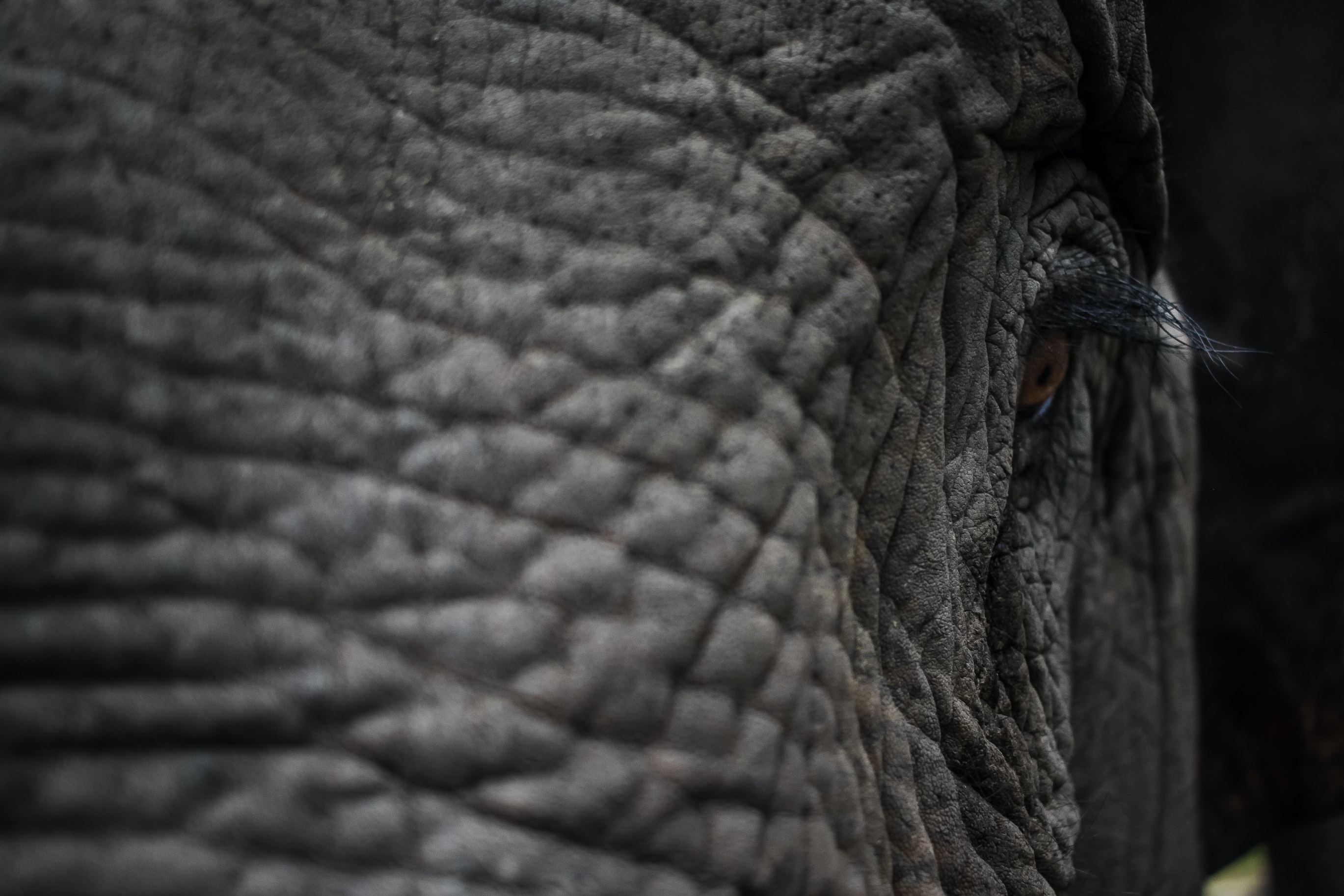 low light photography of elephant