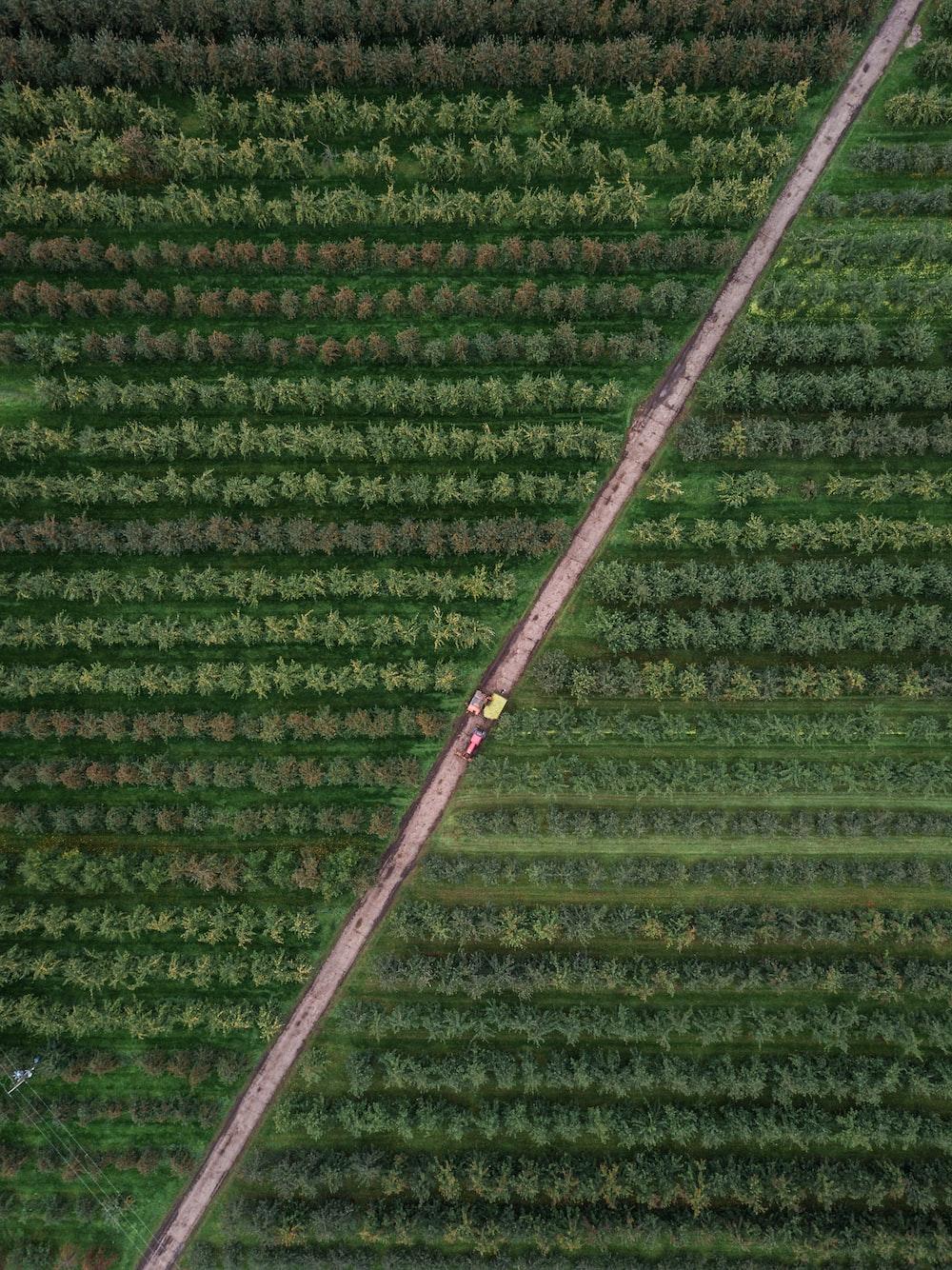 bird's eye photography of trees