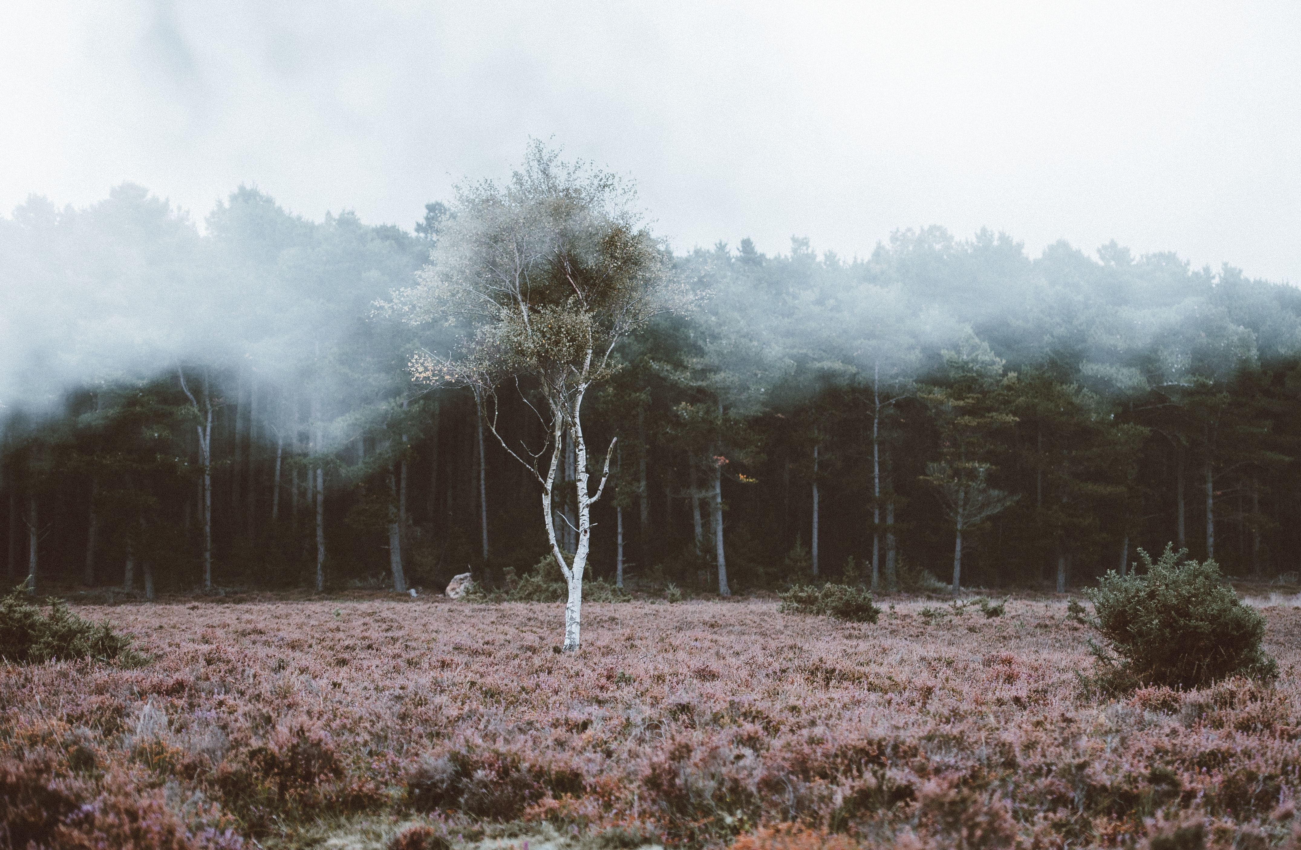 green leafed trees covered with fog