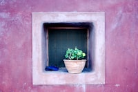 green potted plant on window