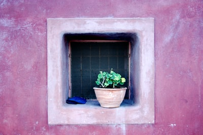 green potted plant on window pot zoom background