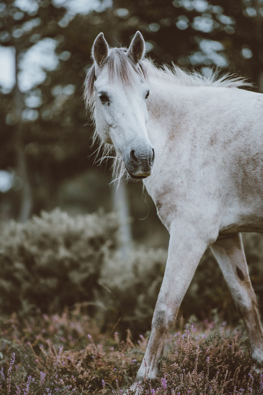 selective focus photography of white horse near green leaf plant