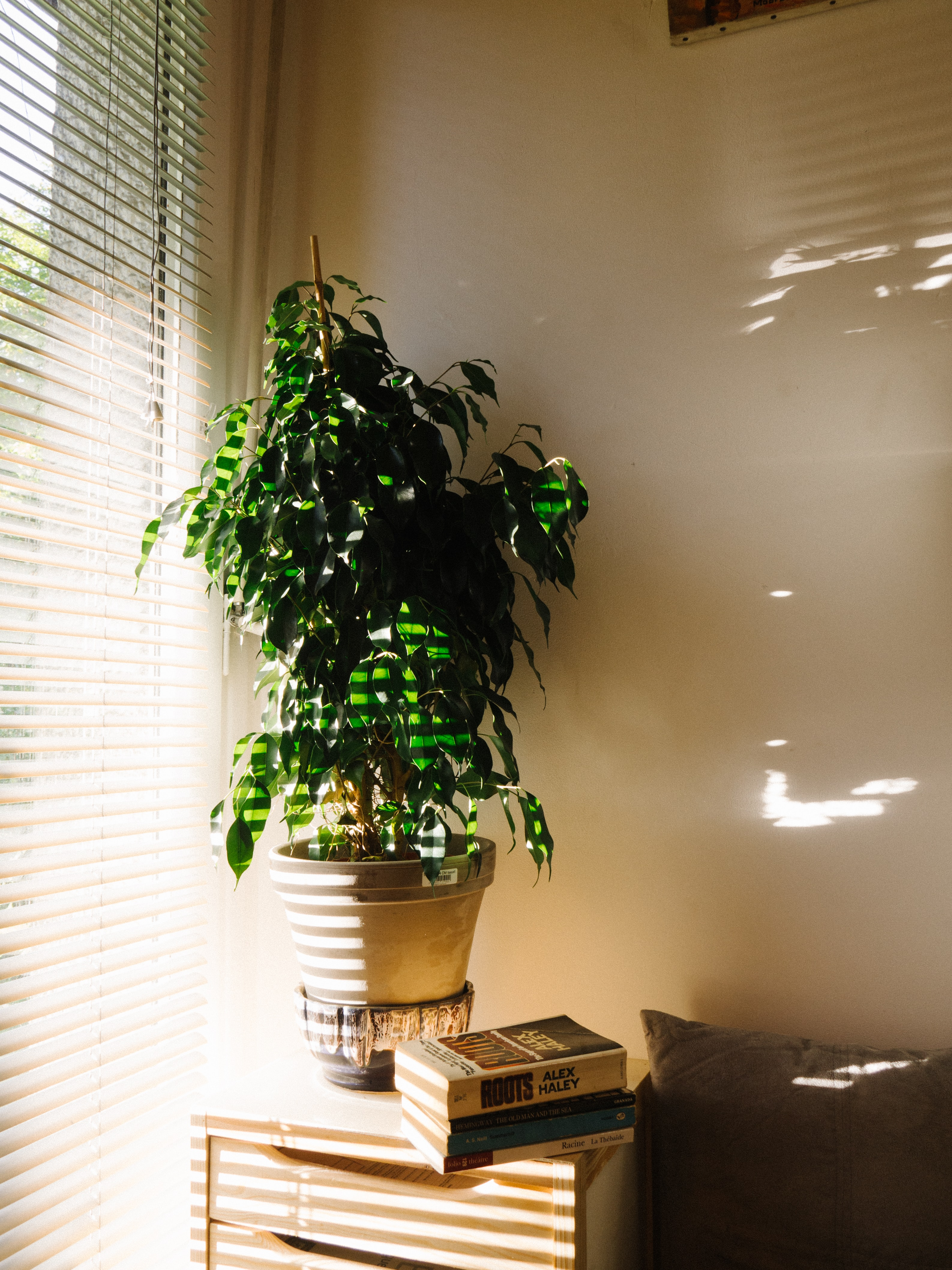 green leafed plant on gray pot near window blinds
