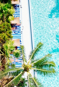 aerial photo of green palm tree beside blue swimming pool at daytime