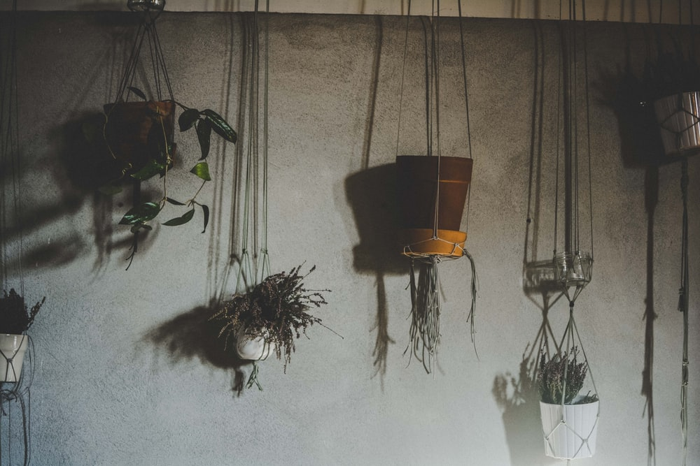 four assorted-color plants on vase hanging on wall