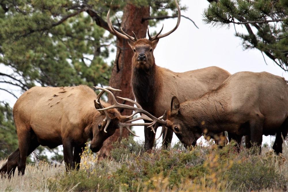 four bucks near tees